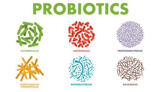 probiotics for testosterone A Healthy Gut and Probiotics Boost Testosterone Production